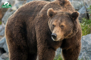 ours-graou_310x205_1x
