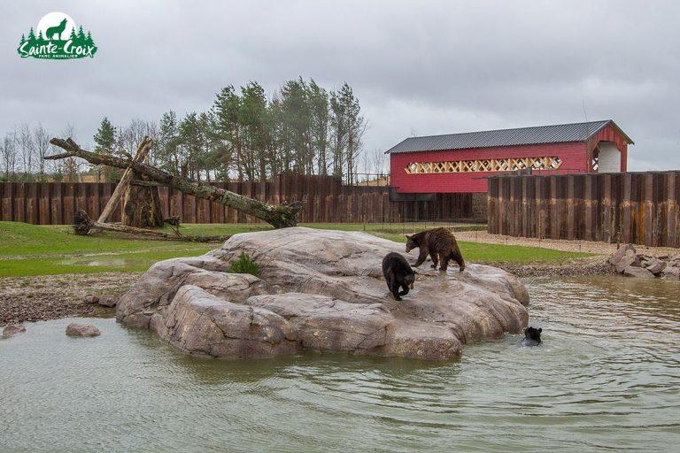 quot-le-nouveau-monde-quot-se-developpe-sur-8-5-hectares-ici-la-petite-plaine-accueillant-les-ours-noirs-photo-morgane-bricard-1554453471